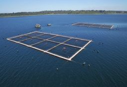 Expertos opinan sobre informe que revela deficiencias en fiscalización a la salmonicultura
