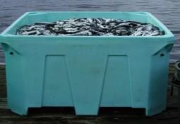 Productores europeos de salmón en alerta por virus mortal