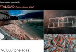 Heterosigma akashiwo y Karenia: las dos microalgas detectadas en fiordo Comau