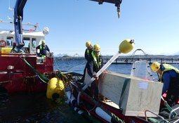 Innovador sistema de trampas reduce la infestación por piojos de salmón