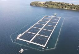 Grupo acuícola chileno instalará barreras de microburbujas en centros irlandeses