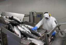 Conforman mesa técnica del primer Barómetro de la Salmonicultura en Chile