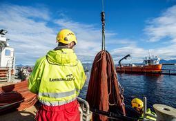 - Nye produksjonsstrategier har gjort det mulig å slakte mer fisk gjennom året