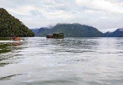 Cooke Aquaculture Chile logra nueva certificación libre de antimicrobianos