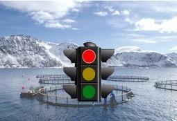 Comité internacional evalúa sistema de semáforos utilizado en salmonicultura noruega