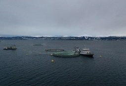 Productora noruega prueba nueva tecnología de cultivo cerrado en mar