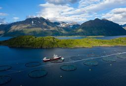 NTS kjøper mer i Norway Royal Salmon