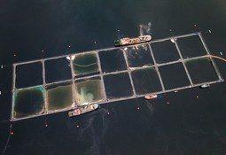 Científicos piden que salmonicultura considere riesgos climáticos y capacidad de carga