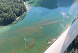 El trabajo de Mowi para lograr prevenir con éxito impacto de algas nocivas