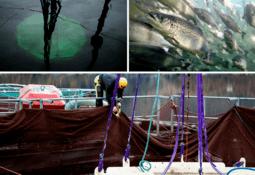 Nedsenkede merder kan være fremtiden for oppdrettsfisk