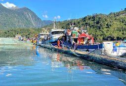 Salmones Camanchaca aumenta pérdidas y ampliará su exposición en Aysén