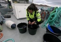 Forsker for økt fiskevelferd