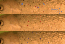 Crean método no invasivo 100% preciso para identificación de peces