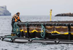 Shetland costs lower Q2 EBIT/kg for Scottish Sea Farms