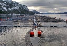 Nova Austral es la segunda salmonicultora en adherir a pacto de sostenibilidad