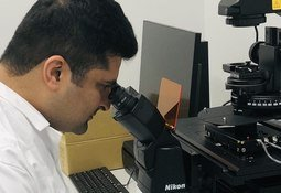 Ny kunnskap om persistent PRV-1-infeksjon hos laks