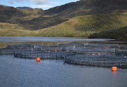 Gremio afirma que irregularidades no son prácticas comunes en salmonicultura