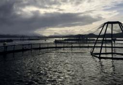 Nytt utvalg skal se på tillatelser i havbruksnæringen