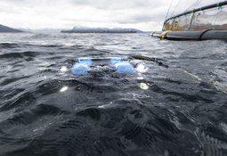 ROV-operatør om dårlig oppdagelse av hull i not: - Glad for fokuset