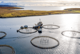 Clean energy solution planned for Scotland's salmon farmers
