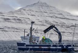 Bakkafrost harvested 21,800 tonnes of salmon in Q3