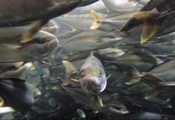 Kingfish Company signs France retail deal
