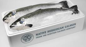 Bakkafrost reaches for last portion of Scottish Salmon