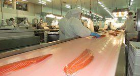 Salmones Aysén pasa las pruebas y vuelve a operar con sus dos plantas