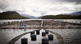 Buscan incentivar instalación de proveedores acuícolas en Aysén