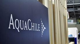 AquaChile concreta ajustes ejecutivos en Salmones Magallanes