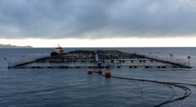 Salmones Camanchaca implementará alimentación remota desde Puerto Montt