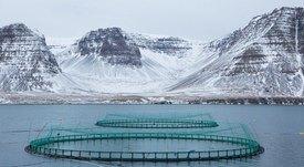Icelandic salmon farmer raising £48m for growth