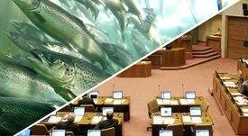 Aprueban idea de legislar pesca de salmones escapados y trabajadores expresan posturas dispares