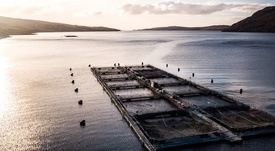 Gill damage causes 52.8% mortality at Wester Ross site