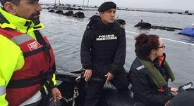 SMA formula cargos a Marine Harvest Chile por escape de peces