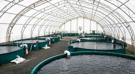 Solar panels help grow fish in British Columbia
