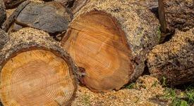 La madera podría ser la próxima forma de alimentar a los peces
