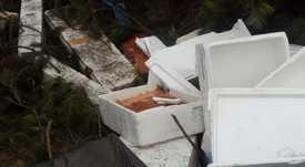 Investigan procedencia de salmón arrojado en Puerto Montt