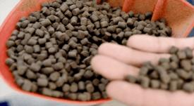 Logran patentar proteínas de origen bacteriano para alimentos de peces