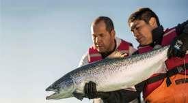 Salmonicultores asociados a GSI aumentan 168% tratamientos no medicinales
