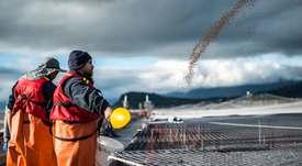 ¿La salmonicultura chilena da buenas condiciones a sus trabajadores?