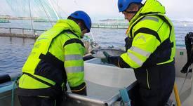 Krever innenlands sortering av produksjonsfisk