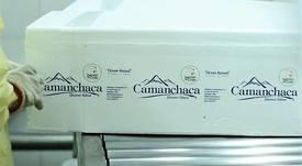 Camanchaca enviará salmón fresco a China directo de Puerto Montt