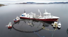 Ingresan primeros peces a jaula sumergible Atlantis