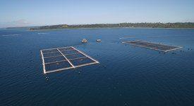 Productores de salmón chileno se preparan para mayores restricciones