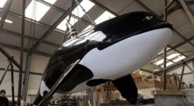 Mowi Escocia ocupa orca falsa para ahuyentar focas