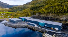 Benchmark avanza en nuevo tratamiento contra piojo del salmón