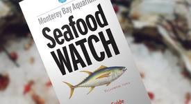 Eliminan calificación de Buena Alternativa para salmón de Nova Austral