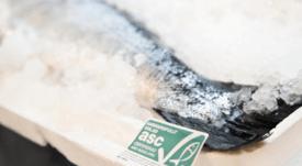 ¿Son eficaces las certificaciones de sostenibilidad para la salmonicultura?