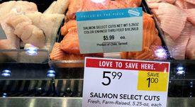 Proyectan sólida recuperación para el salmón chileno en Estados Unidos